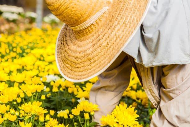 Mulher colhendo flores