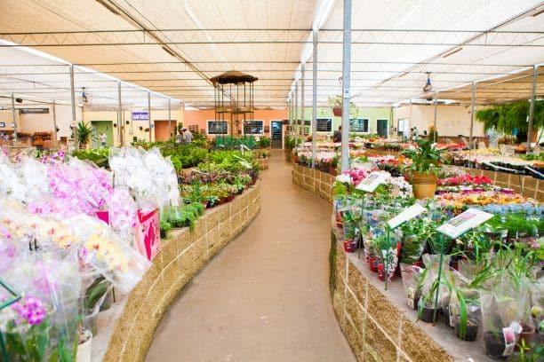 loja de flores em Holambra