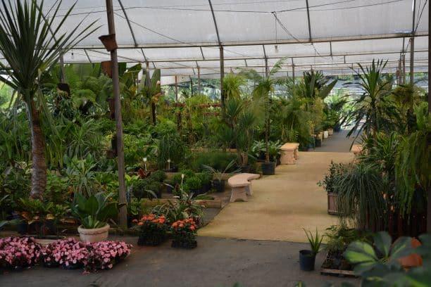 Plantas do Paraíso Garden