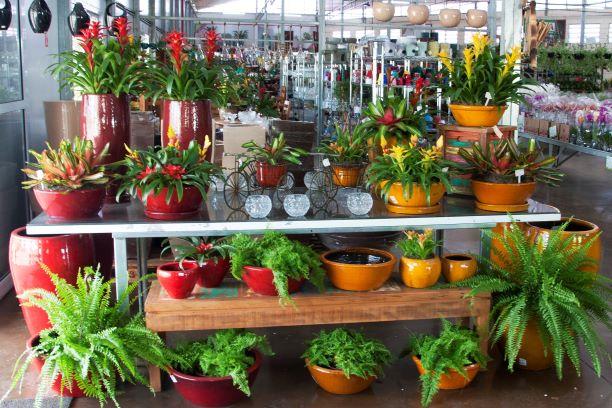 flores e plantas do Verde Chácaras e Quintais