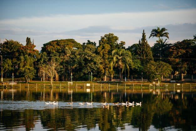 Patos nadando no lago